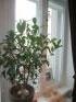 charmante Doppelfenster im Wohnzimmer