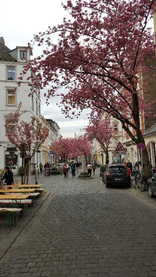 Wohnungen Bonn : Wohnungen Angebote In Bonn